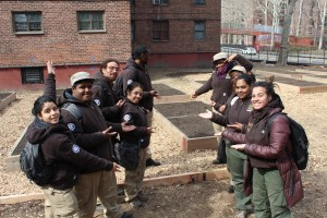 Corps Members built raised beds for a resident garden at NYCHA's Ingersoll development in Brooklyn.