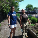 GCF Hosts Goldman Sachs Volunteers for Farm Work Day